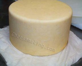 Mesophilic Cheese Culture (5)